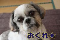003_20081118114650.jpg