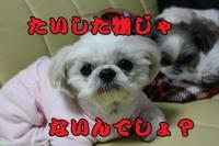 004_20081215165301.jpg