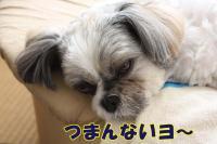 006_20081021115609.jpg