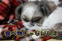 006_20081215165305.jpg