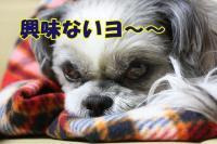 008_20081215165316.jpg