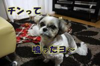 010_20081127152925.jpg