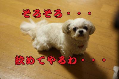 011_20090417115524.jpg
