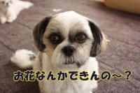 013_20081027105803.jpg