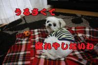 013_20081127152931.jpg