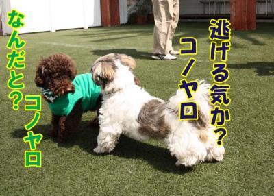 013_20090324211027.jpg