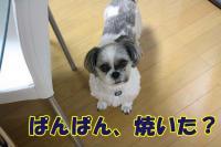014_20081215165336.jpg