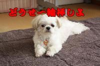 015_20081027105809.jpg