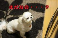 019_20090305220512.jpg