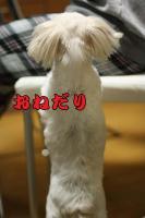 024_20090305220539.jpg