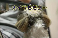027_20090305220700.jpg