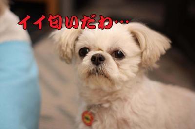 037_20090327212859.jpg