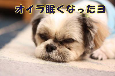 039_20090327212900.jpg