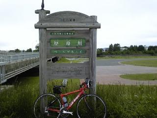自転車 大樹