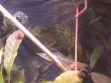 メルモン2008年12月26日1