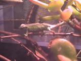 ルディス・ベビーさん2008年11月27日2