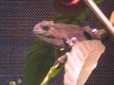 ルディス・ベビーさん2008年12月12日2