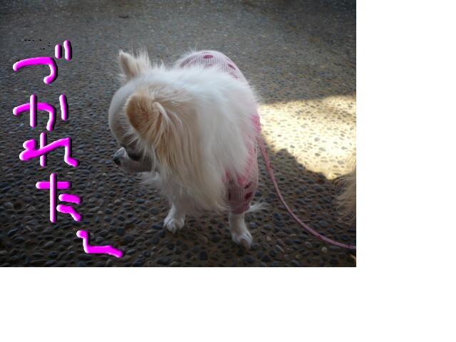 snap_hchtu_200966195824.jpg