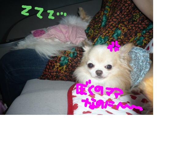 snap_hchtu_20099018127.jpg