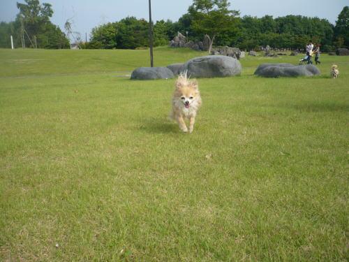 toyama20090614.jpg