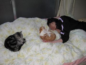 猫、猫、寝子
