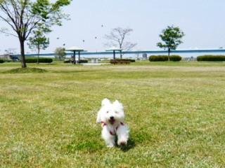 2008年木曽三川