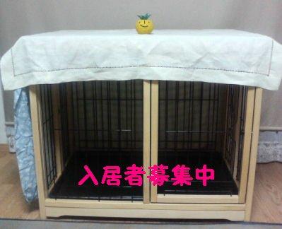P1000013-73-t_sh01.jpg