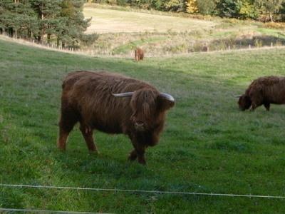 牛にもいろんな種類があるもんだと感心