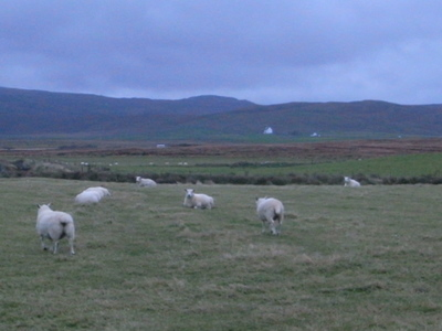 逃げる羊たち