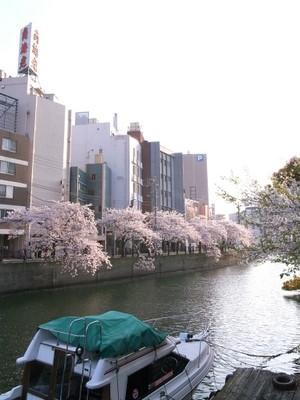 大岡川は桜の名所
