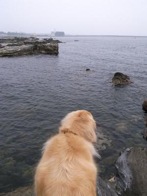 海を眺めるハナ