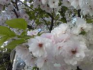 2009_0413_081516-SH370044.jpg