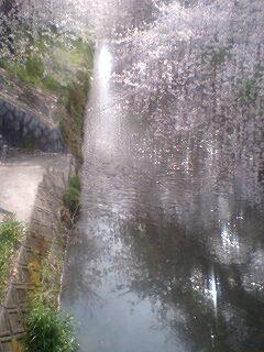 090405_1507~0001両岸黒川ご用水の桜