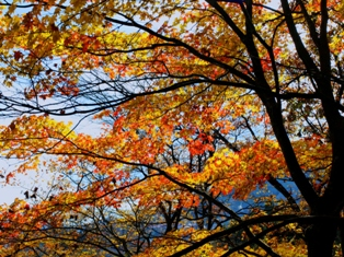 004青い空と山に映える紅葉
