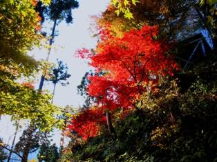 013御嶽神社下の真っ赤な紅葉