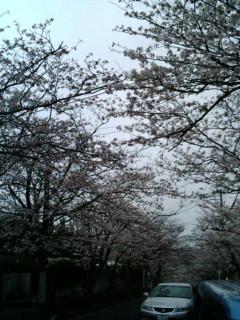 kamasakura02.jpg