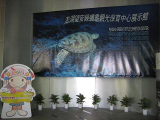 green turtle exhibition2