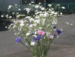かすみ草と矢車草 web 090515
