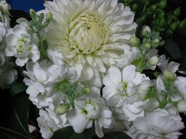 20120310花