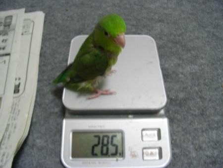 レディの体重公開