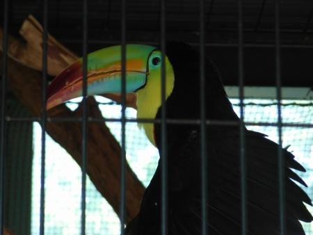 動物園の鳥さん