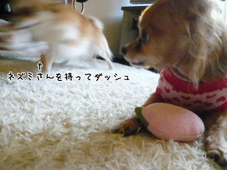 2008-01-16-09.jpg