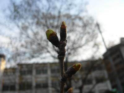 2008-03-16-24.jpg