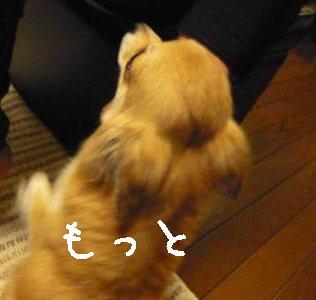 2008-03-21-13.jpg