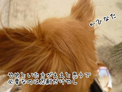 2008-03-22-06.jpg