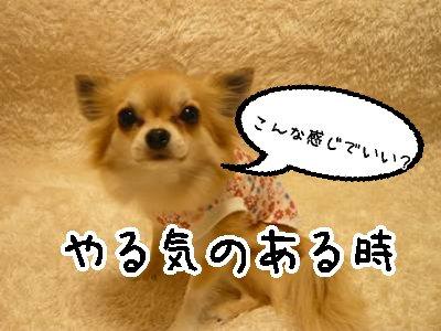 2008-03-28-03.jpg