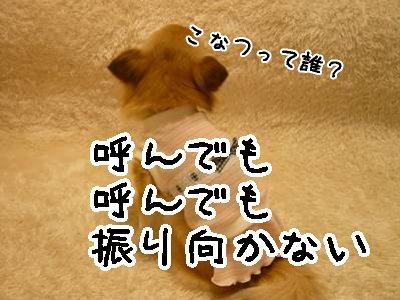 2008-03-28-04.jpg