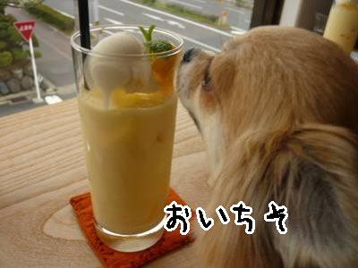 2008-04-09-35.jpg