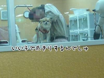 2008-06-21-04.jpg