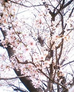blog-06040101.jpg